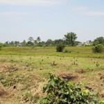 200 árboles de hormigo fueron sembrados en el Bosque Sonoro, Mazatenango.